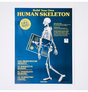 Le Squelette Humain à fabriquer