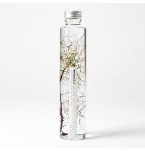 Échantillon Plant Specimen 03 – Large