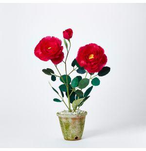 Plante en papier - Rosier Floribunda
