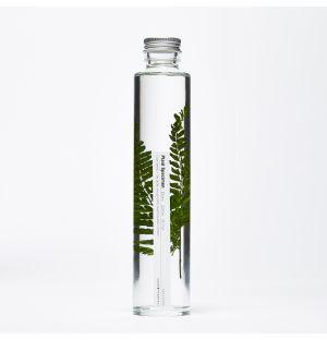 Flacon Plant Specimen 15 - Large