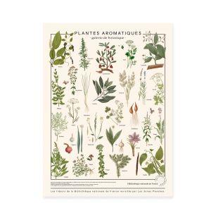 Affiche Plantes aromatiques
