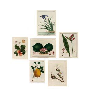 Cabinet de Curiosités de 6 affiches Jardin Extraordinaire