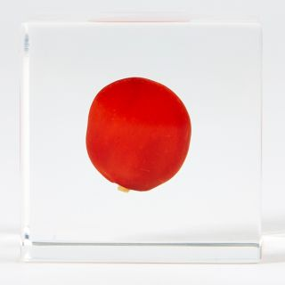 Cube Sola Huayruro